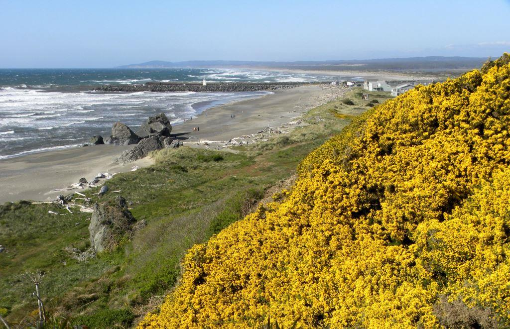 12-OR_coast-yellow-Flowers_web.JPG